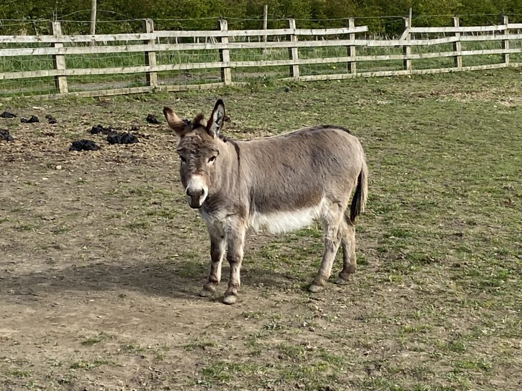 Donkey with Perfect Vision